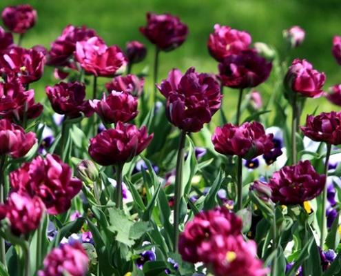 تجارت گل در ایران