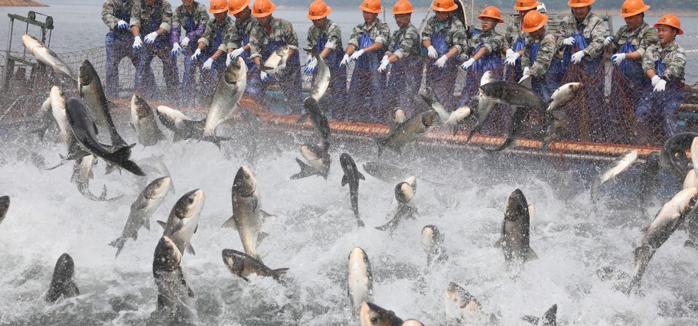 تولید و پرورش ماهی