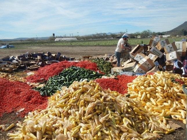 امنیت غذایی و اتلاف غذایی