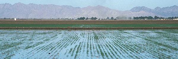 آبیاری زمین های کشاورزی
